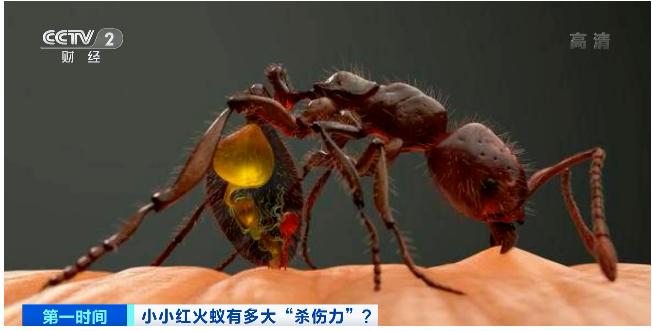 惕!红蚂蚁已入侵我国12个省,435个县市区