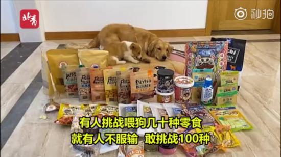 宠物狗被强迫当大胃王,视频博主